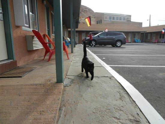 Inca Inn: Inka the friendly kitty!