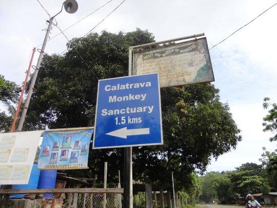 Calatrava Monkey Sanctuary: Calatrava, Negros Occidental