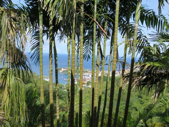 The Lodge Grenada: View from the porch where we ate breakfast and dinner!