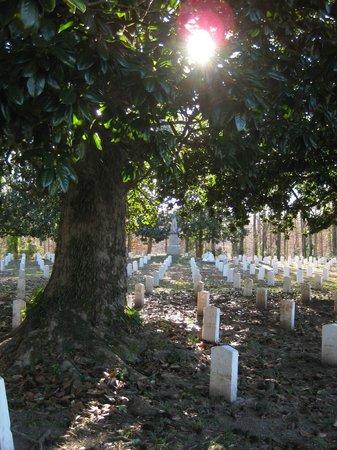 Friendship Cemetery: magnolia sunlight