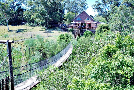 Kragga Kamma Game Park: A view of the Restaurant and the hanging bridge.