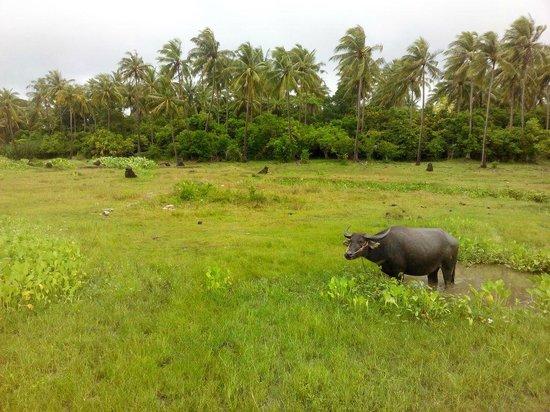 Ban Raya Resort & Spa: Fields nearby