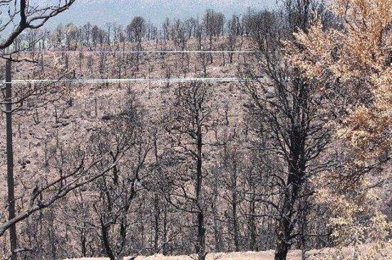 Royal Gorge Bridge and Park : More Burnt Trees