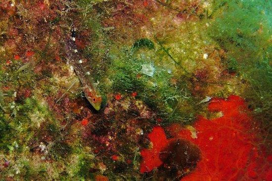 Bubbles Dive Centre : fish