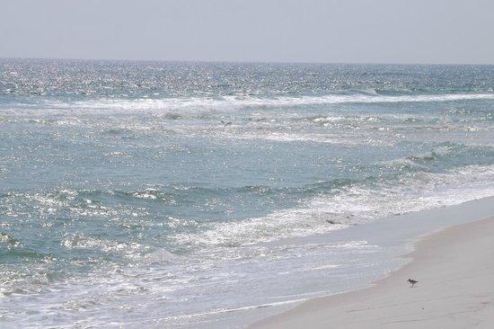 Pensacola Beach  |   Pensacola, FL