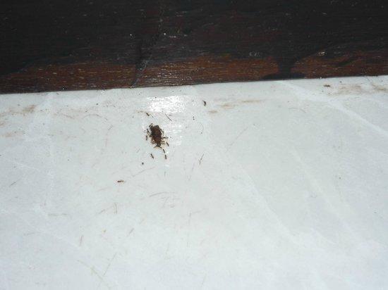 Chanalai Flora Resort: муравьи в номере