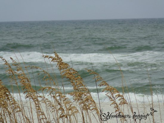 Gulf State Park : Watch the waves roll in