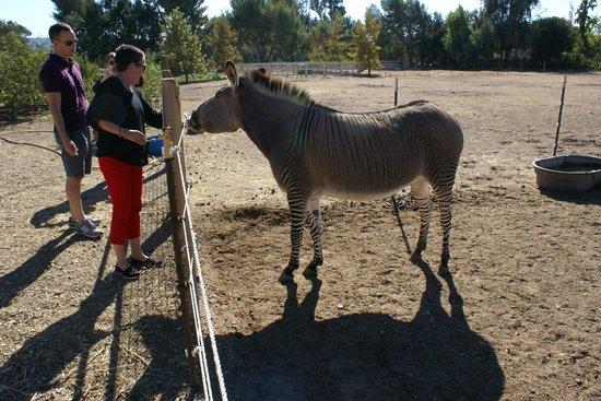 DeeTours of Santa Barbara: Zonkey!!!! @ Seein' Spots Farm