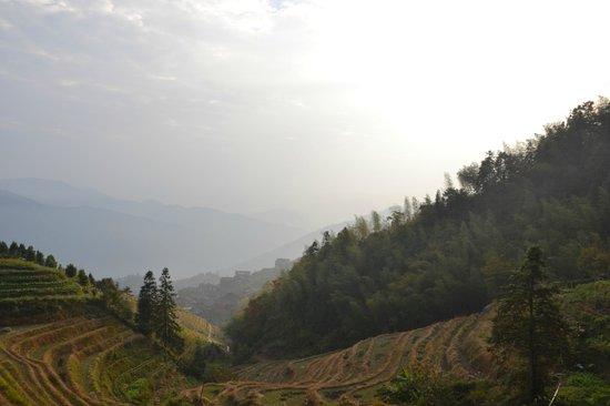 Dragon's Backbone Rice Terraces : Longji rice terrace