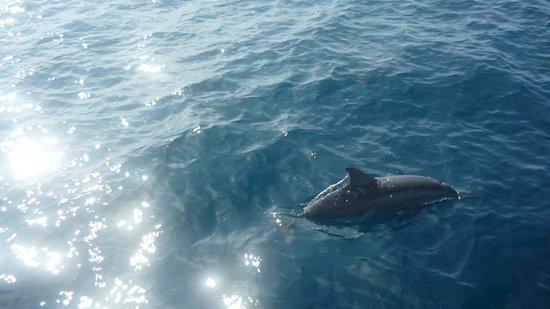 Club Med Kani: dauphins