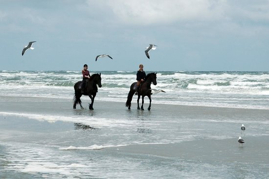 Terschelling, The Netherlands: Buitenrit Fries paard