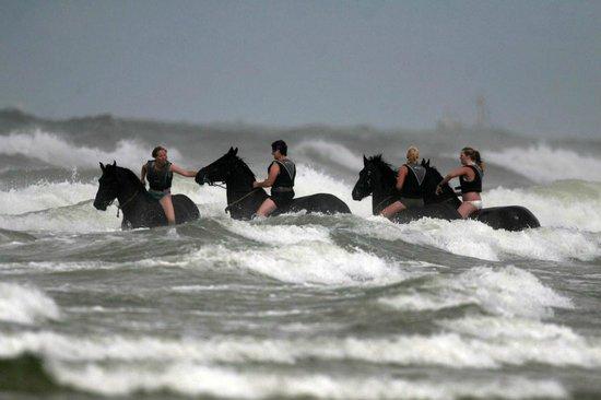 Puur Terschelling - Day Tours: zwemmen met Friese paarden