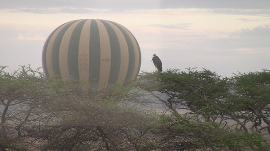 Seronera Wildlife Lodge: Balloon passing lodge