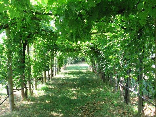 Azienda Bioagrituristica Ficareto: Pergolato d'uva nel giardino dell'agriturismo