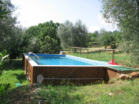Azienda Bioagrituristica Ficareto: La piscina