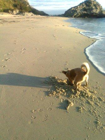 Grotticelle beach: Genna the dog loves Grotticelle!!!!