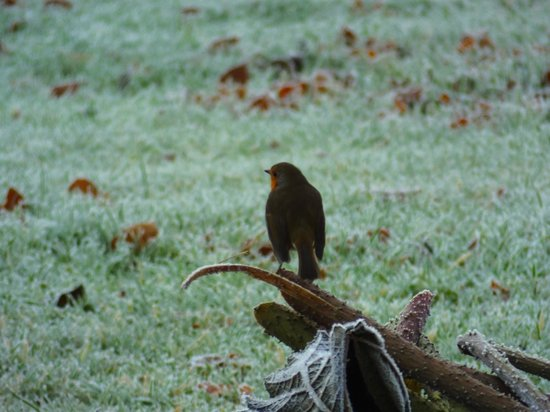 Boath House Hotel: Robin on frosty morning