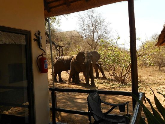 Kurhula Wildlife Lodge: Naast het huisje staan de olifanten te eten
