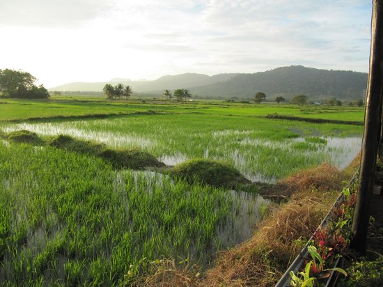 Pia's The Padi - in the Middle of a Padi fields of course
