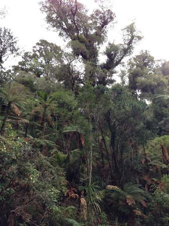 Coromandel Forest Park : Джунгли Коромандела