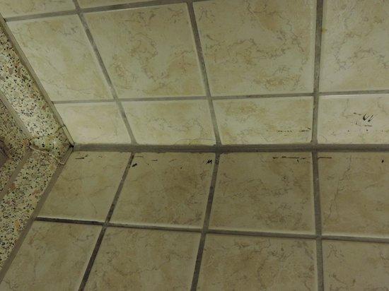 Alternative zum Hotel und Pension: Schimmel in der Dusche