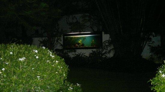 Ann's Residency : AQUARIUM