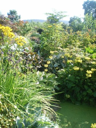 Larch Cottage Nurseries: Luscious borders filled with stock plants