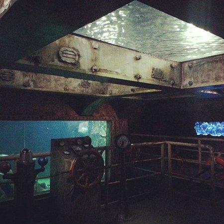 Sao Paulo Aquarium: Sala dos tubar?es no Aquario de Sao Paulo