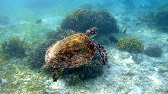 Mabul Water Bungalows: Snorkeling