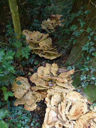 Anglesey Abbey: Fungi
