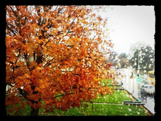 Wedgewood House: Hermosísimo árbol, merecía la pena mirar por el ventanal del cuarto de baño.