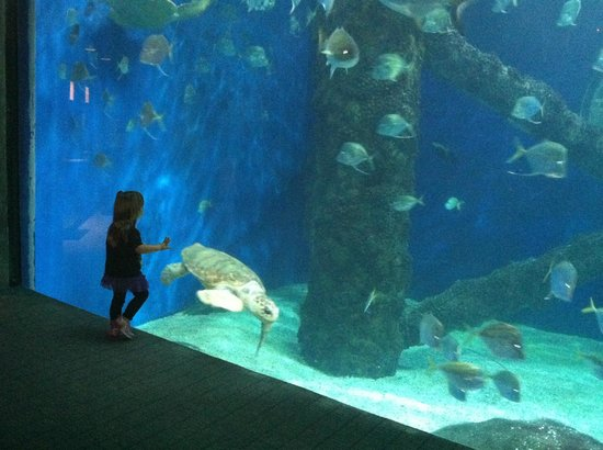 Hey Mr Sea Turtle Do You Know Where Nemo Is Picture Of