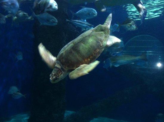 Sharks Picture Of Virginia Aquarium Marine Science Center Virginia Beach Tripadvisor
