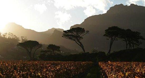 Simon's Restaurant: Vista dos vinhedos de Groot Constantia
