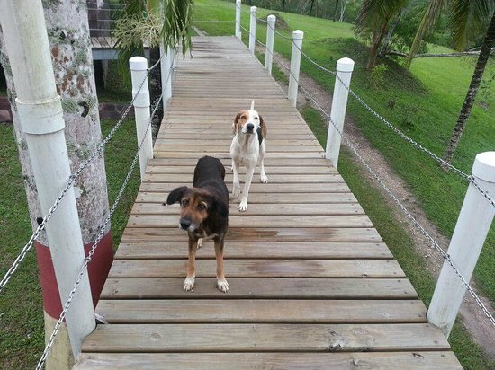 Rumors Resort : Friendly dogs that live here