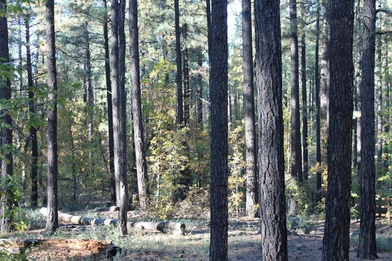 WorldMark Pinetop : Woods nearby for hiking