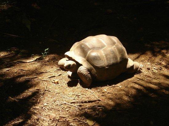 Beachcomber Seychelles Sainte Anne : Les tortues de l'hôtel