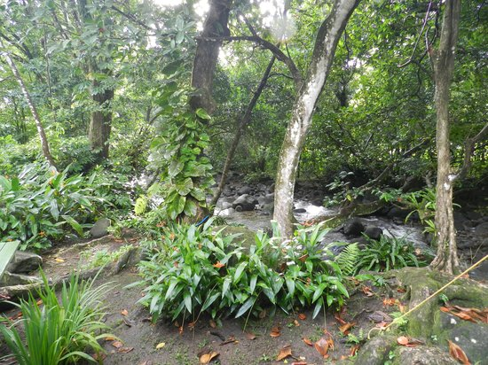 Citrus Creek Plantation : View from tent