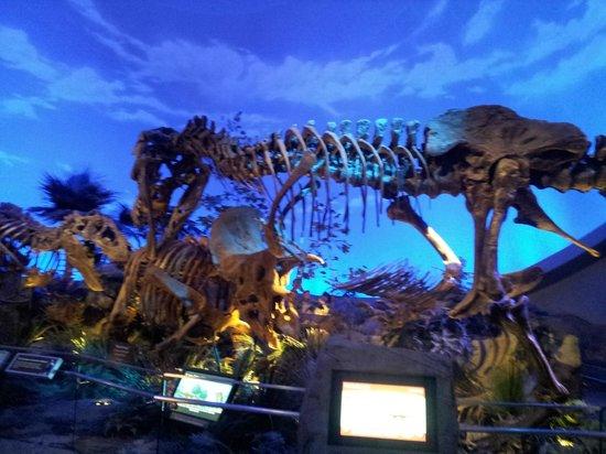 Children's Museum of Indianapolis : Dinosphere