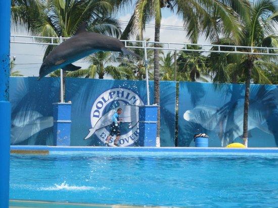 Dolphin Discovery Puerto Vallarta: Dolphin show