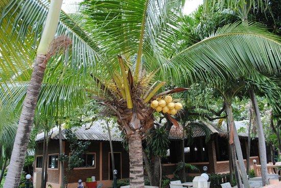 Royal Orchid Resort: Территория около Отеля