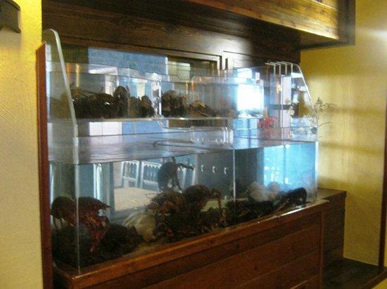 Restaurante Parrilla O Piano: Mariscos Frescos de nuestra tierra