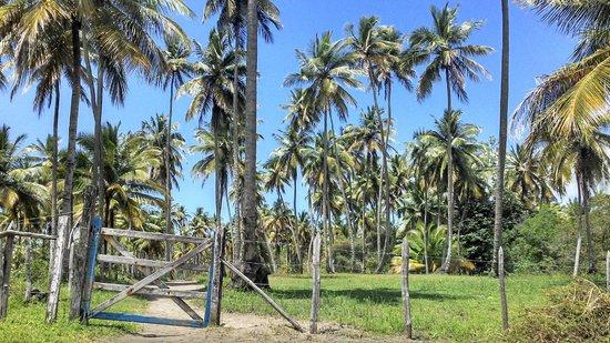 Morere: Trilha para Praia de Moreré