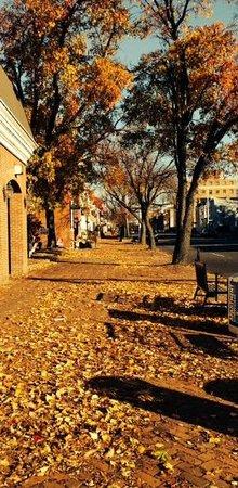 Old Town: Fall leaves along S. Washington Street