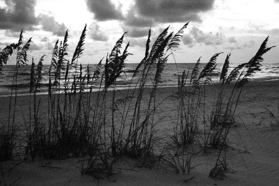 Lido Beach: Sand dunes