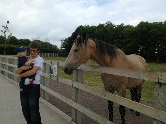 Tannaghmore Farm and Gardens: The resident horse loves apples