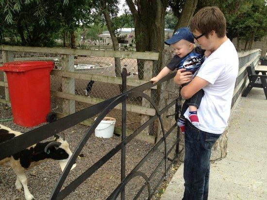 Tannaghmore Farm and Gardens: Friendly goats
