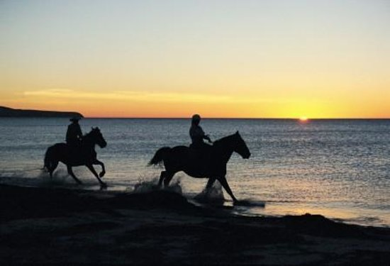 Normanville, Αυστραλία: High Country Trails Horses on Beach