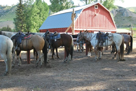 Spotted Horse Ranch : Barn