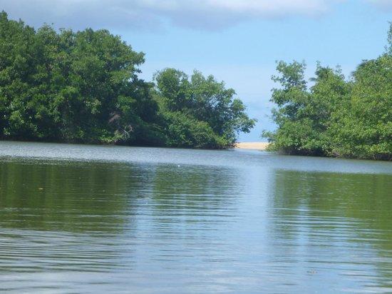 MKG Centre Nautique : la mangrove séparée de la mer par une petite bande de sable.
